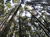 谷關七雄馬崙山挑戰:20090111---P097.JPG