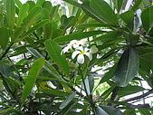巴里島愛未眠之旅:20081209---P108.JPG