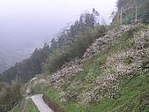雪見遊憩區與司馬限林道完美恐怖組合:20080125--P034.JPG