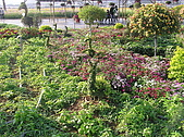 20091128台中後山武陵農場露營:20091128---P038.JPG