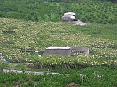 20090419水雲三星鳥嘴山探險:20090419---P015.JPG