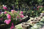 2015-2016台灣旅遊:古坑羅莎玫瑰花園