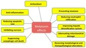 觀霧森林:melatonin effects.jpg