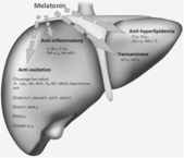 觀霧森林:Possible-mechanism-of-action-of-melatonin-on-improving-dyslipidemia-and-hepatic.png