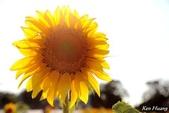 午後,向日葵:0T9A4954-1.jpg