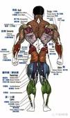 成人保健:後側肌肉.jpg