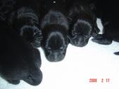 小犬大集合:DSC03687.JPG