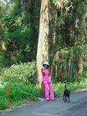 藤枝之旅:南台灣唯一針葉林區