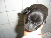 小犬大集合:DSC03683.JPG