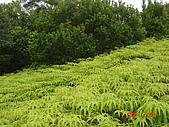 小墾丁南仁湖之旅:南仁湖不知名植物