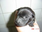 小犬大集合:DSC03684.JPG