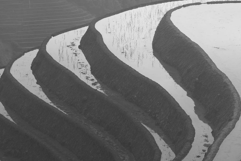 印象龍脊:_06A4428.jpg