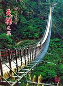溪頭,太極峽谷之旅:竹山天梯1.jpg