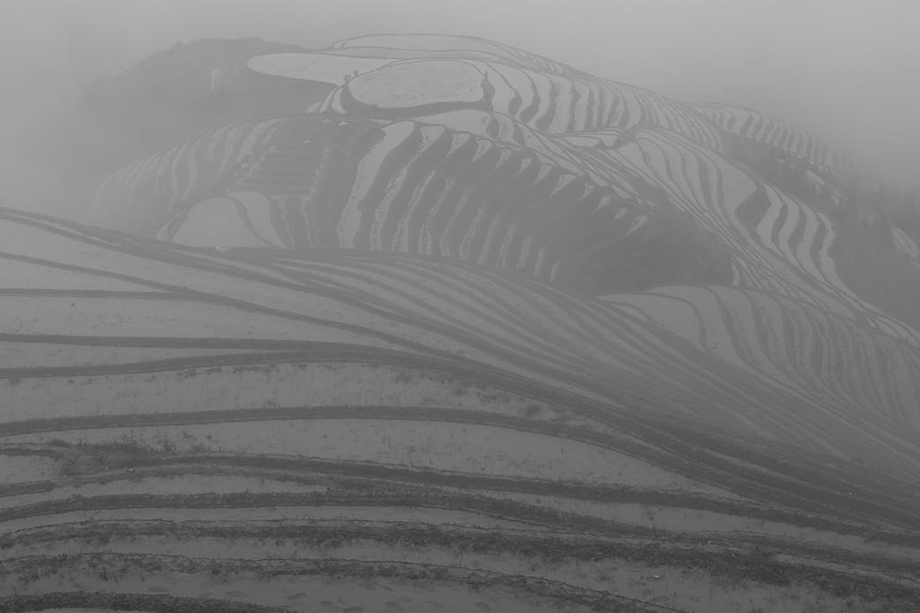 印象龍脊:18A_2504.jpg