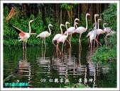 103年師生聯展:09 紅鶴家族   葉清坤.jpg