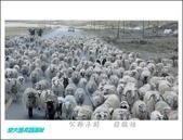 103年師生聯展:公路羊群   陳德祐.jpg