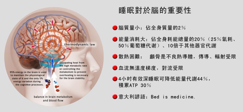 睡眠對於腦的重要性:引用BTC網頁內容