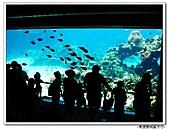 99.11.11~18…東澳雙城蜜月行(第4天) :布里斯本-第四天 (92).jpg