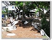 99.11.11~18…東澳雙城蜜月行(第4天) :布里斯本-第四天 (27).jpg
