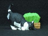 貓國物語 6:Mimus