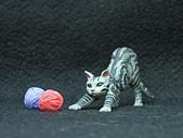 寵物大好-貓咪篇:IMG_0534.jpg
