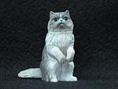 寵物動物 4:# 014-B