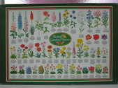 移山仍須努力:British Garden Flowers