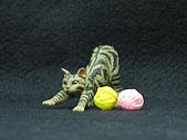 寵物大好-貓咪篇:IMG_0536.jpg
