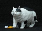 貓國物語 1:Morve