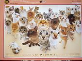 移山仍須努力:Cat Summit