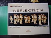 移山仍須努力:reflection