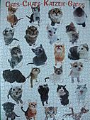 貓拼圖 before 2014:CATS.CHATS.KATZEN.GATOS - 1