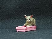 寵物大好-貓咪篇:IMG_0535.jpg