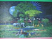 非貓拼圖 before 2014:Animals Jungle - 8