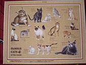 貓拼圖 before 2014:Famous Cats of The World