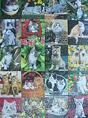 貓拼圖 before 2014:cuddly cats - 1