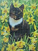 貓拼圖 before 2014:Motley in the Wild Daffodils