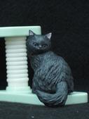 貓國物語 6:Marsa