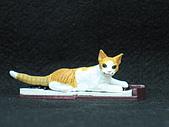 寵物大好-貓咪篇:IMG_0527.jpg