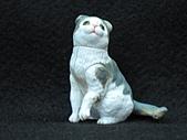 寵物動物 4:# 013-B