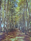 非貓拼圖 before 2014:金色の林道 - 1