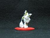 寵物大好-貓咪篇:IMG_0530.jpg