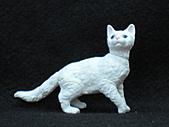 寵物動物 4:# 012-A