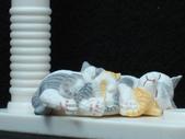 貓國物語 6:Lynn