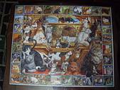 移山仍須努力:The World of Cats