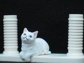 貓國物語 6:Silvy