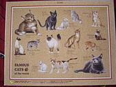 移山仍須努力:Famous Cats of The World