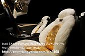 Swarovski_汽車貼鑽_benz SL600_鑲鑽:Made with CRYSTALLIZED_Swarovski Elements_汽車貼鑽_benz SL600_鑲鑽-10.jpg