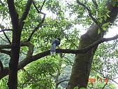 20080420汐止金龍湖健走:DSC04442.JPG