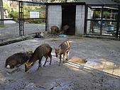 日本動物園之旅第三天:DSC05465.JPG